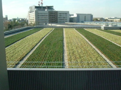 roof_greening_400